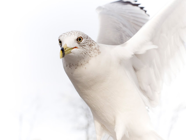 Nice White Bird Wallpaper