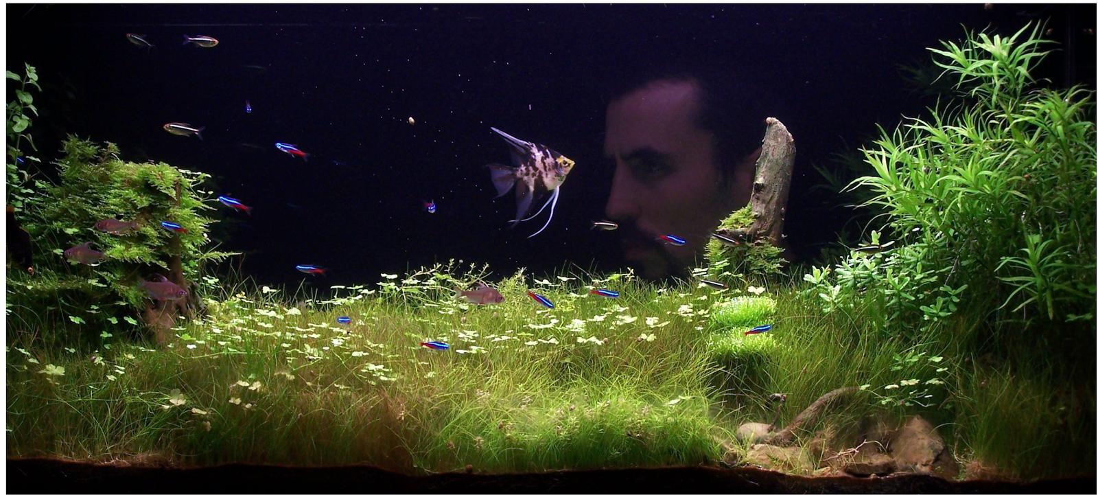 Moje akwarium