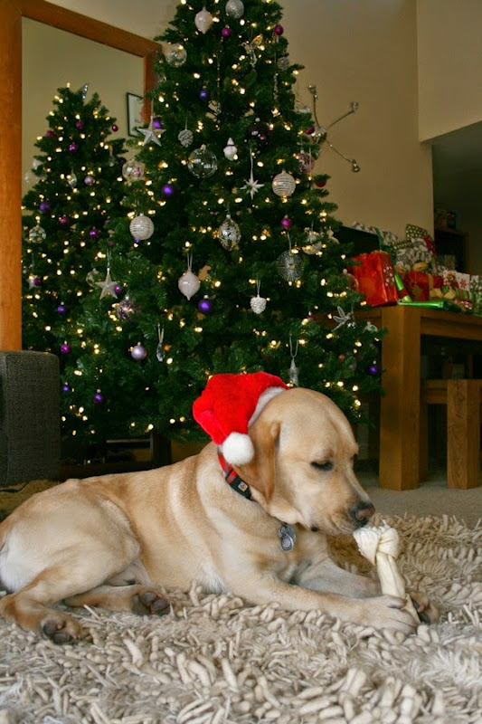Christmas Tree Labrador Cooper