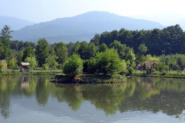 Maşukiye Cansu Alabalık Tesisleri'ndeki gölet