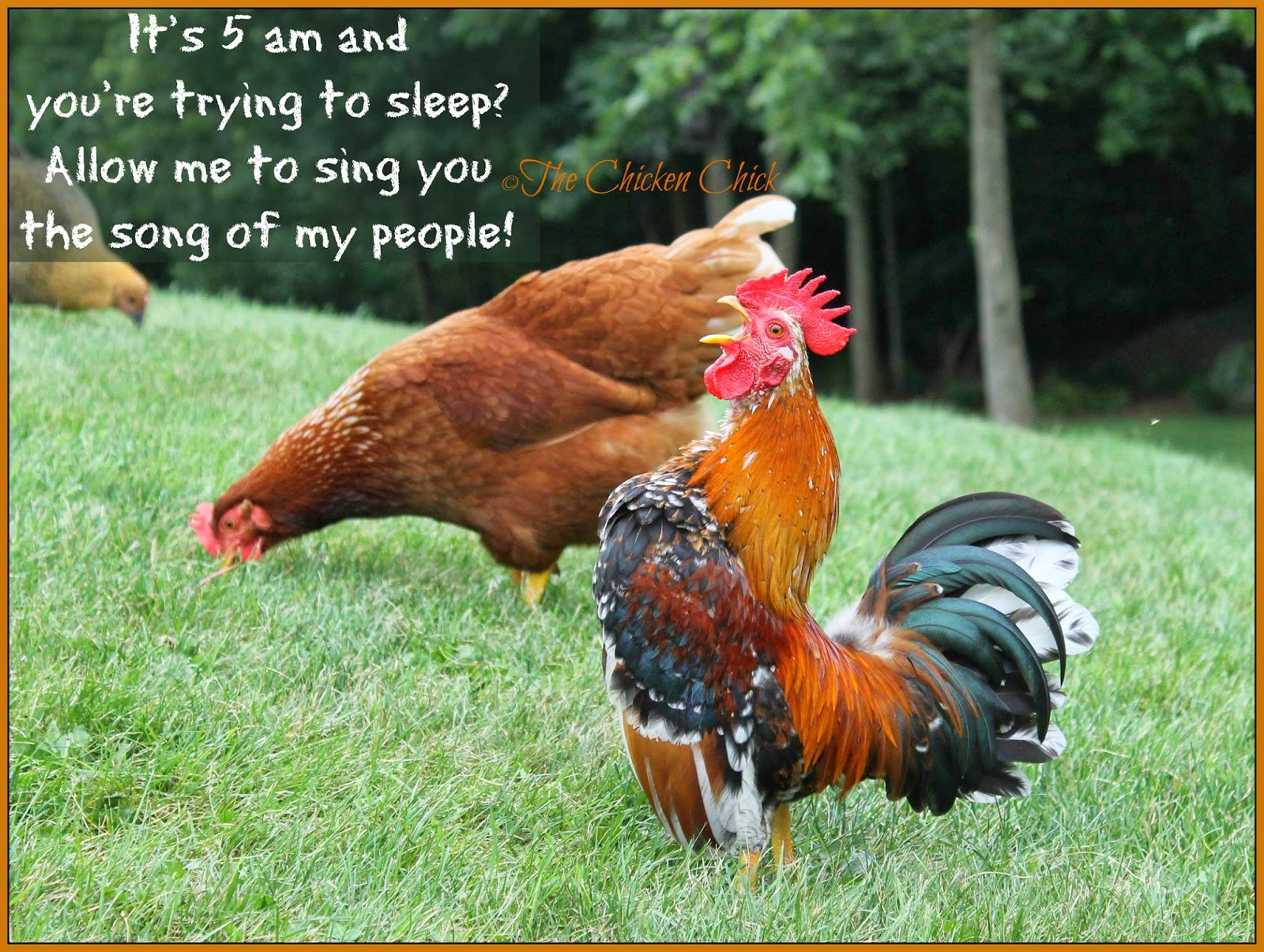 It's 5am and you're trying to sleep? Allow me to sing you the song of my people!