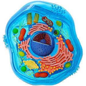 tế bào