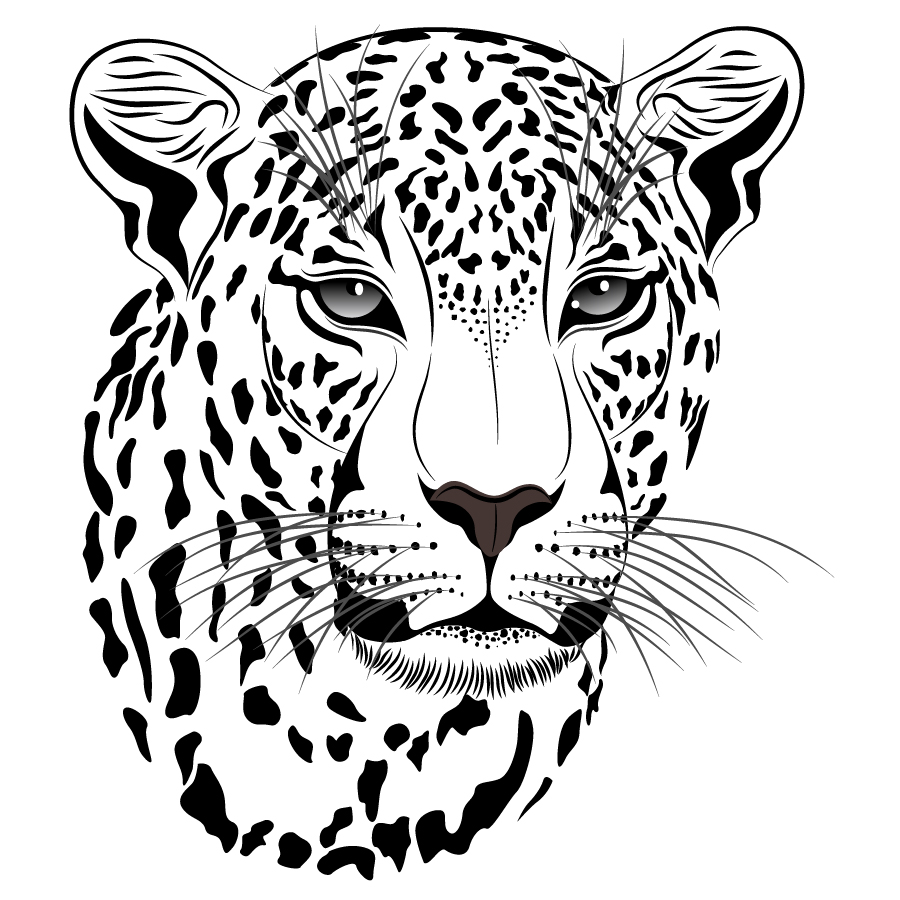 The Art Of Animal Character Design Pdf Free Download : 虎の白黒イラスト tiger picture vector イラスト素材 ai eps イラストレーター