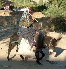 Donkeys is cool