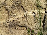Granits travessats per filons de quars