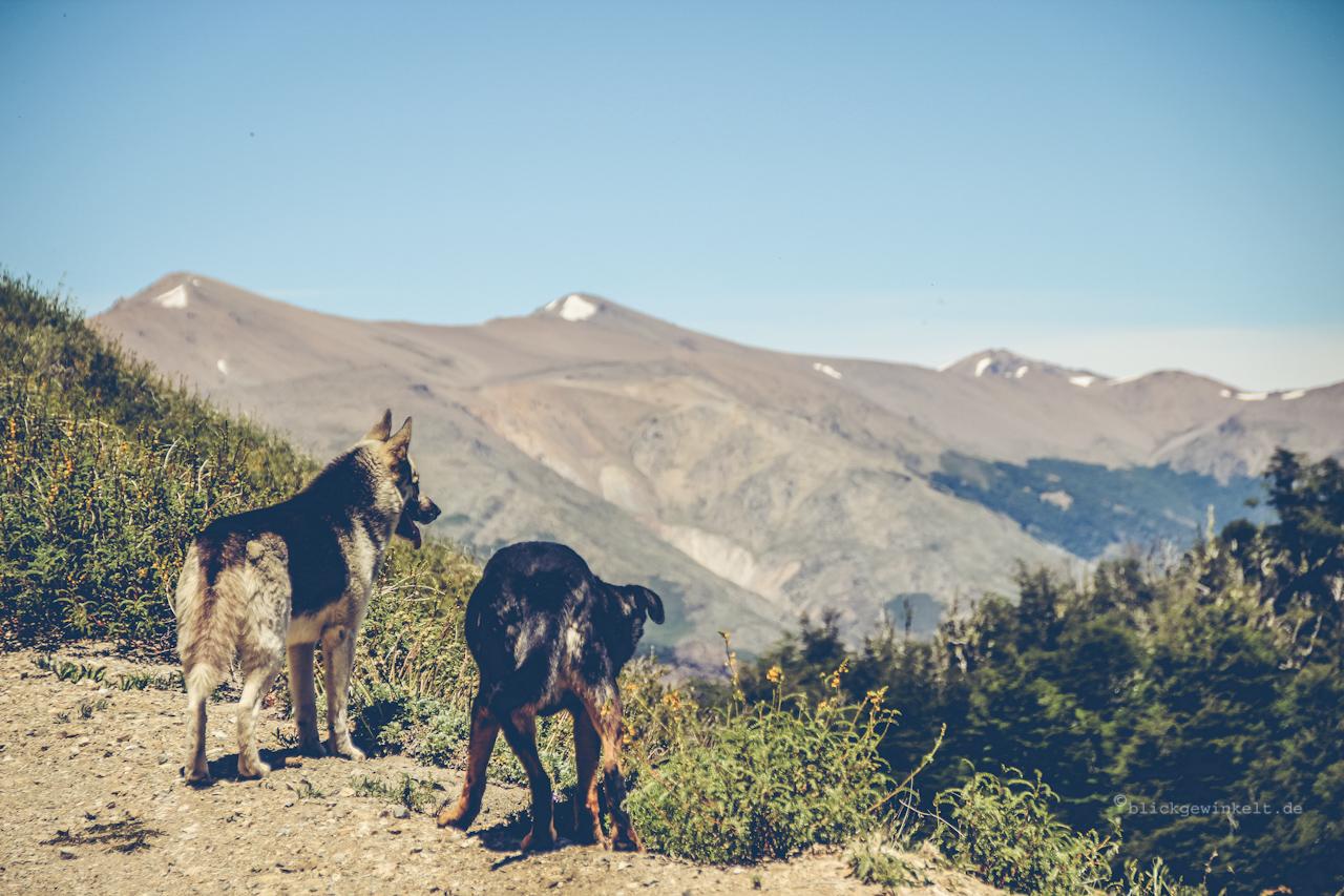 Zwei Hunde mit Bergaussicht