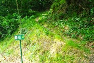 Vista del sendero que asciende al pico Priena