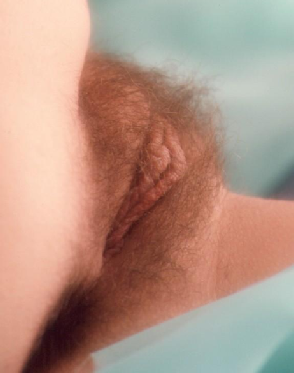 christy canyon mature hairy pussy