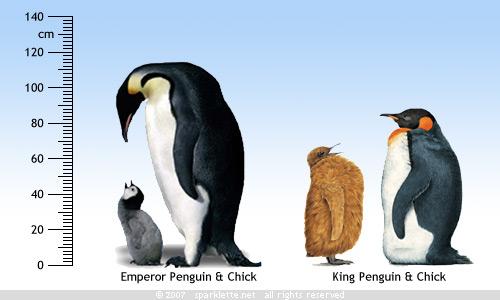 informatica: Emperor Penguin
