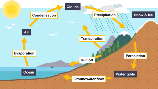 You learn something new every day the water cycle evaporation water is transferred from the sea or a lake into the sky by the heat from the sun condensation the evaporated water cools at dew point and ccuart Image collections