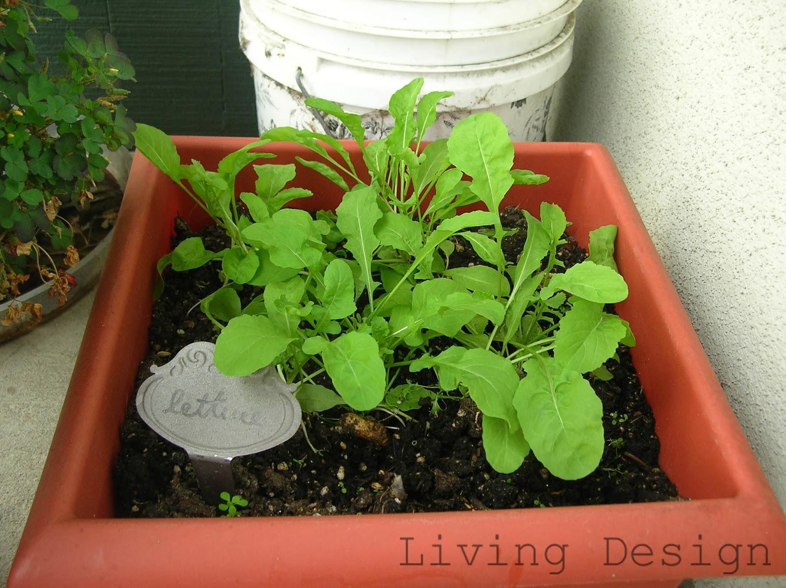 Living Design: February 2014 Garden