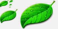 Pengertian dan Fungsi Daun bagi Tumbuhan
