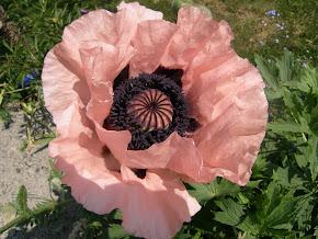 Blommor ur min trädgård