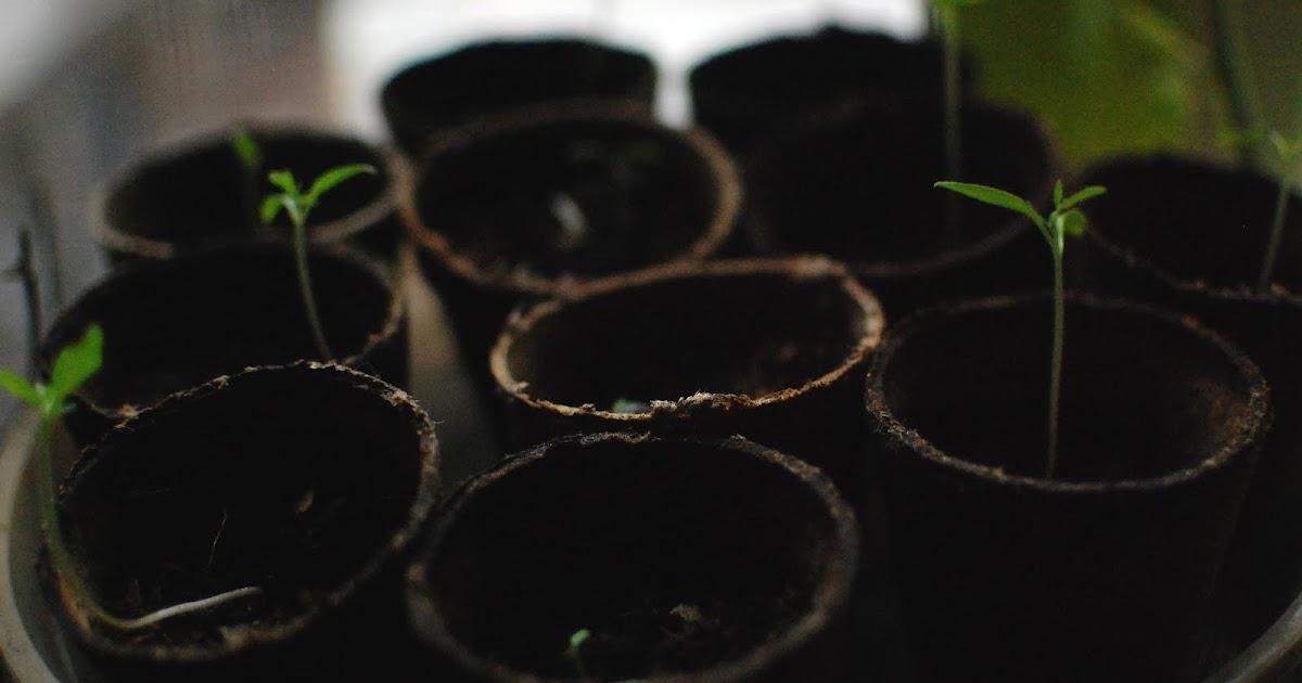 Comment faire de graines de citrouille pr germination - Faire griller des graines de citrouille ...