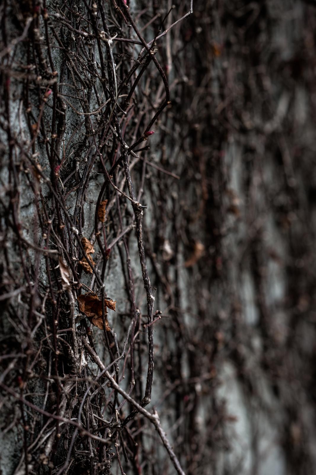 ローキーな枯葉の写真