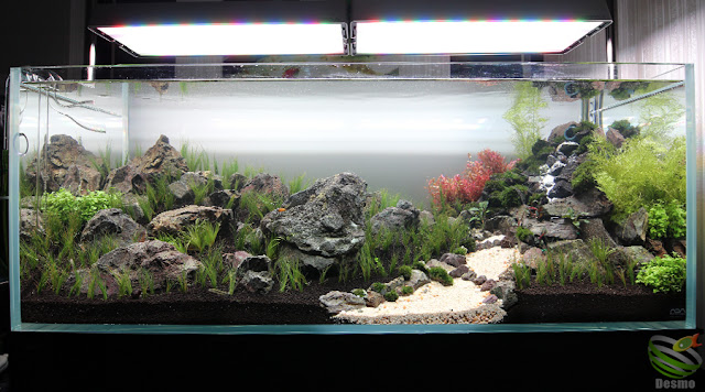 waterfall aquascape
