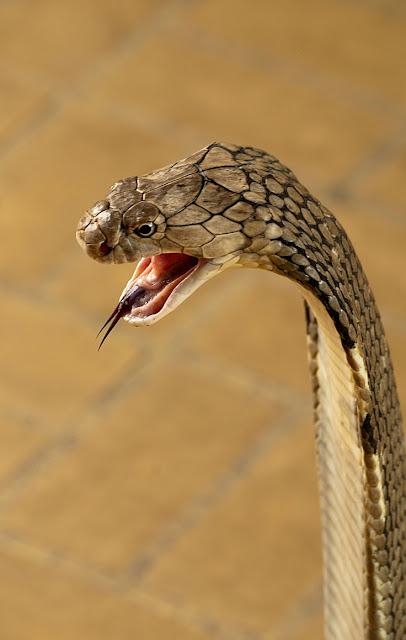 foto: serpiente
