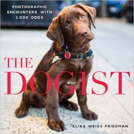 Cover of The Dogist, featuring a chocolate lab seated on a sidewalk. She wears a black walking harness as well as a collar with a red tag on it. Her head is tilted to one side.