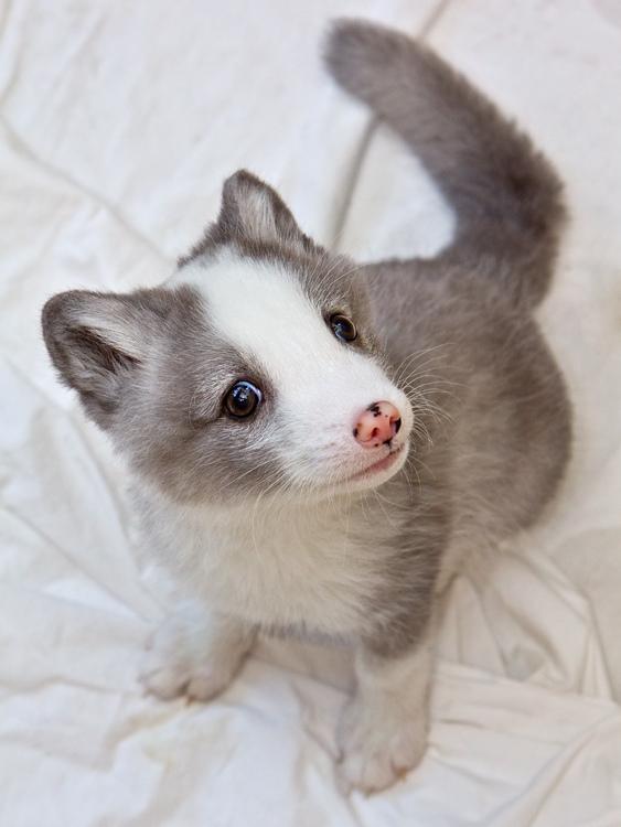 Cute Arctic fox babies | Amazing Creatures