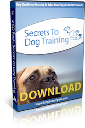 Train Your Dog Easily