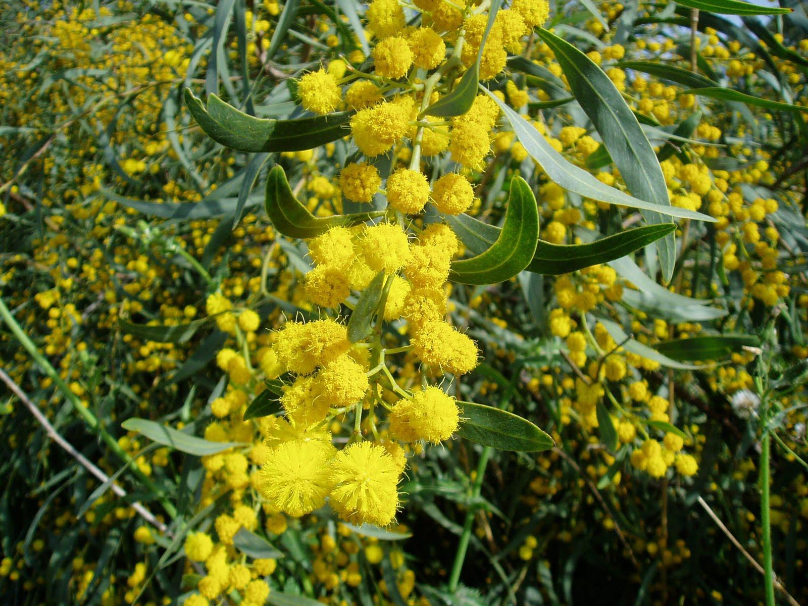 gu a de rboles ornamentales plantas riomoros