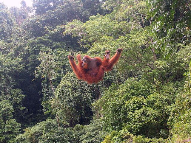 Objek wisata Bukit Lawang Sumatera Utara 5