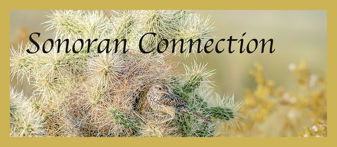 Sonoran Connection