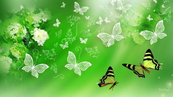 Green Butterfly HD Desktop Wallpaper