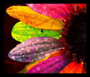El Poder de Las Flores ~
