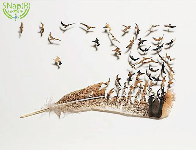 Creative Feather Cutwork — Chris Maynard