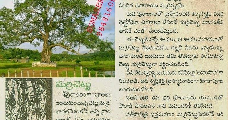 Marri Chettu Telugu Movie Free 16