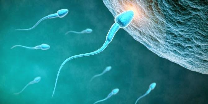 9 Fakta Menarik Tentang Sperma Yang Jarang Diketahui