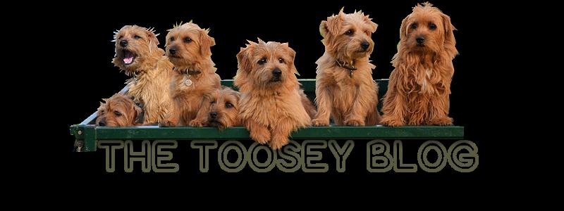 Toosey's Blog