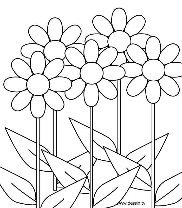 Flower Coloring Pics - Flower Coloring Page