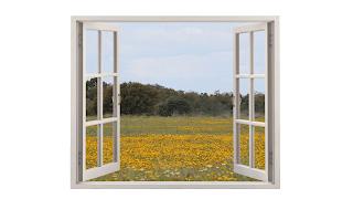 Da minha janela vejo um campo florido
