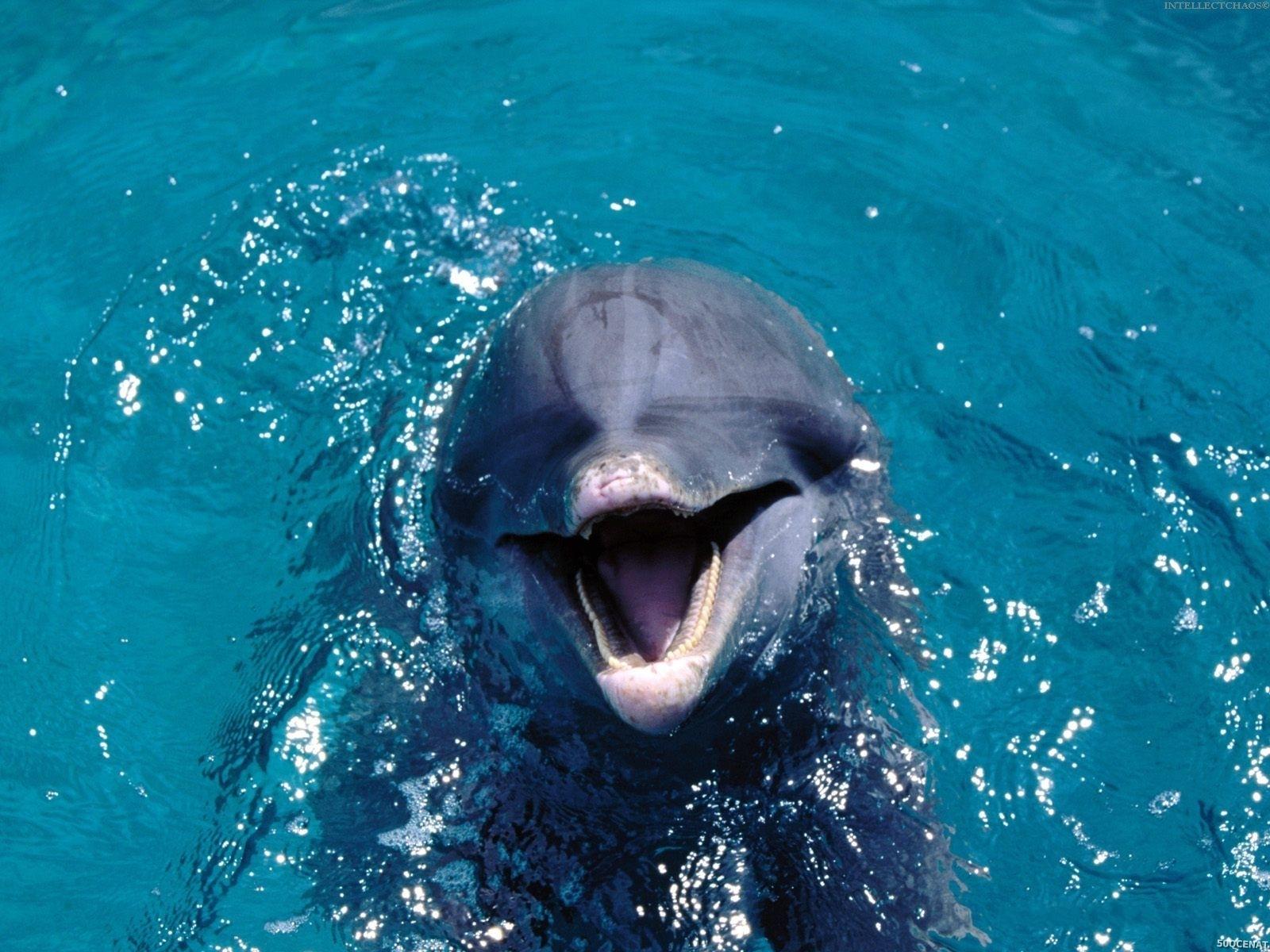 delfinler haqqinda delfinler haqqinda