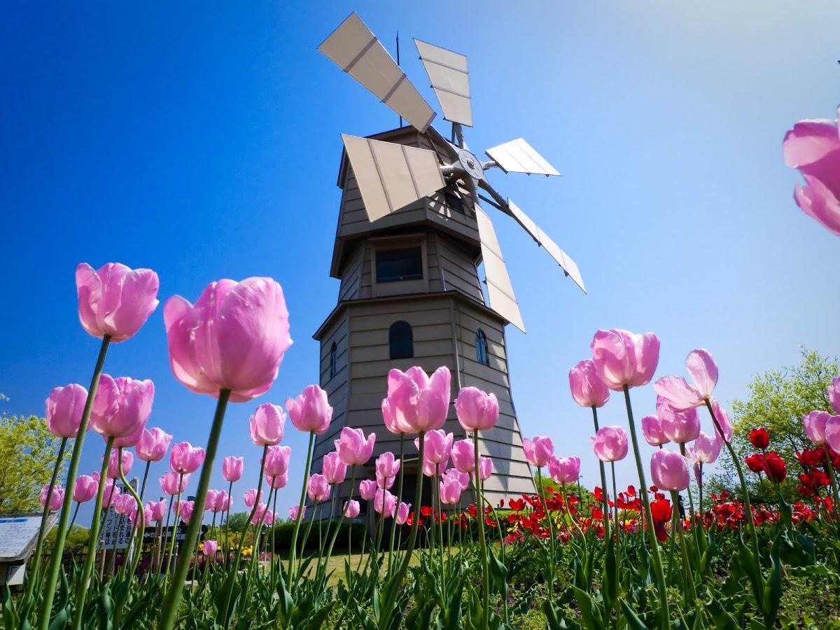 http://4.bp.blogspot.com/-AYbTNRJ9ddU/T9TXAVXdOcI/AAAAAAAAL7A/8zX02Kqim0c/s1200/tulipanes4.jpg