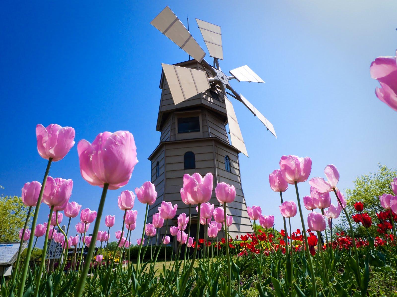Lugares que ver blloembollenstreek la tierra de los tulipanes holanda - Jardines de tulipanes en holanda ...