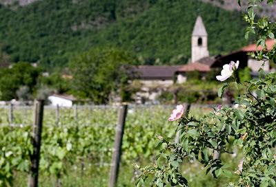 Teroldego DOC Trentino