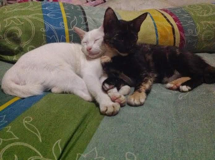 Foto Pupu dan Cleo lagi bobo bareng