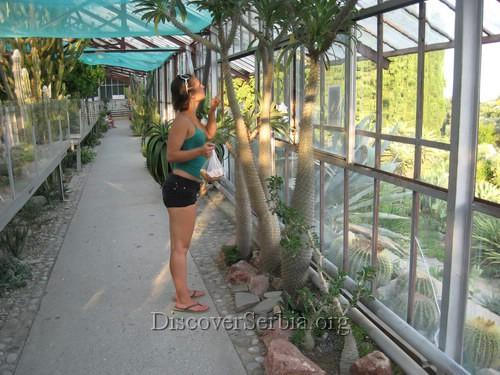 Kaktusi Slike