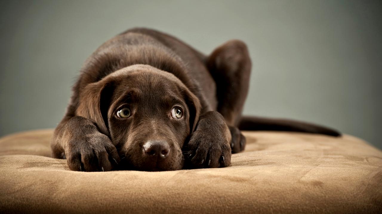 Eres Un Buen Amo Para Tu Perro
