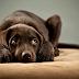 ¿Eres Un Buen Amo Para Tu Perro?