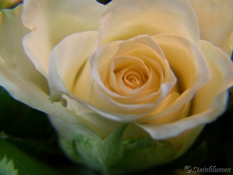 Tischdeko weiße Rosen