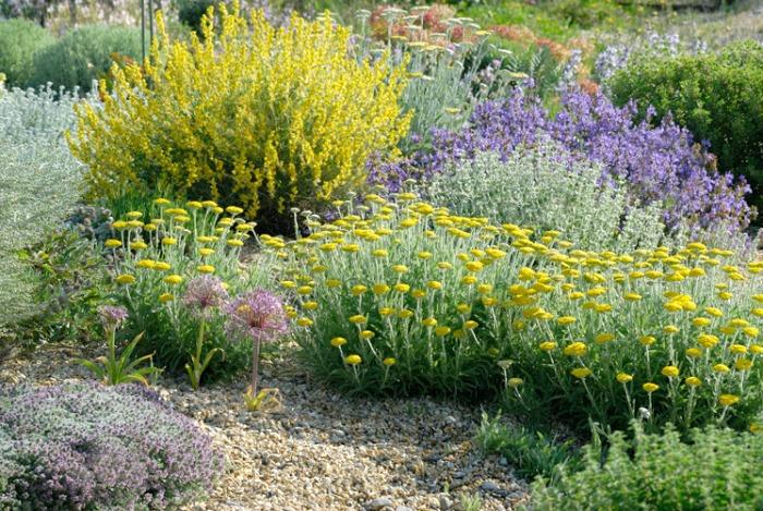 plantas r sticas y resistentes a la sequ a para un jard n On plantas rusticas para jardin