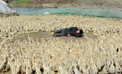 தூக்கம் அவசியம்தான்... அதுக்காக இப்டியா..? (Photo Gallery) Sleep9