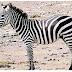 Zebra itu Putih atau Hitam?