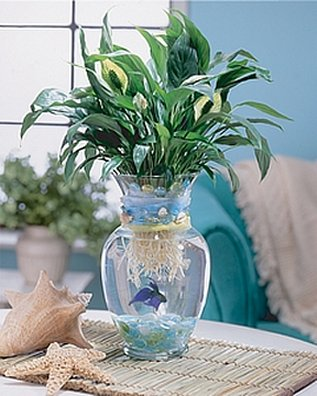 What didn 39 t kill me let 39 s talk about pet fish for Plant with fish in vase