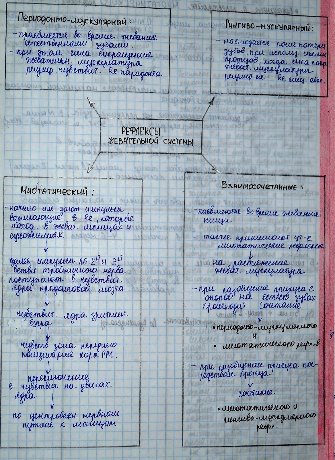 Миоэпителиоцит