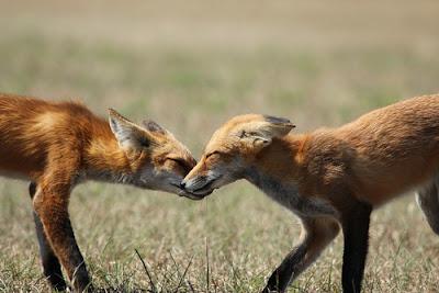 Paixão animais